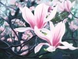 magnoliasthumb.jpg