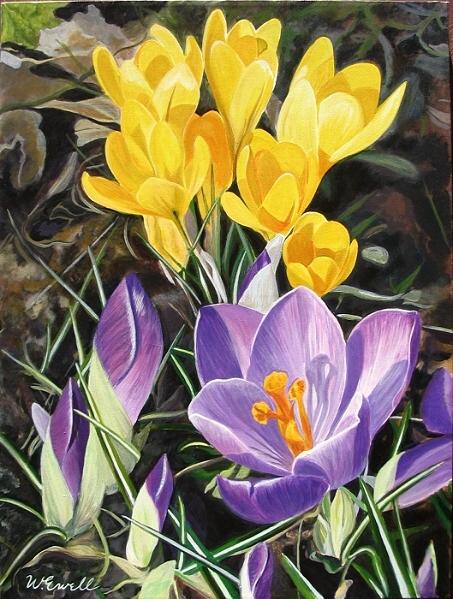 purpleyellowcrocuses.jpg