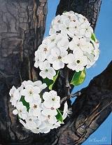 springblossomsthumb.jpg