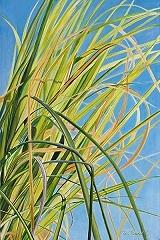 sunlitgrassthumb.jpg